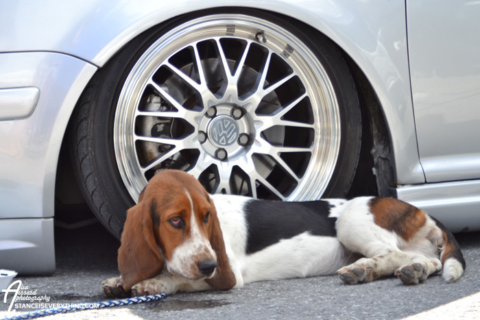 fitted_ottawa_vw_dog